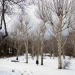 El bosque de la Herrería y la silla de Felipe II