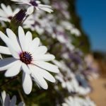 Photowalk floral primaveral en Calpe