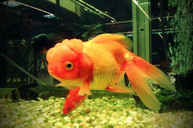 ¿Quién decia que los peces no tenian cerebro?