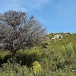 El suelo que absorbe la vitalidad del árbol