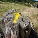 Las Flechas Amarillas te guían en el Camino de Santiago