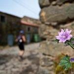 Los pequeños detalles del Camino de Santiago