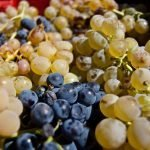Elaboración del vino a través de el pisado de la uva