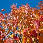 82/365 Los colores del otoño