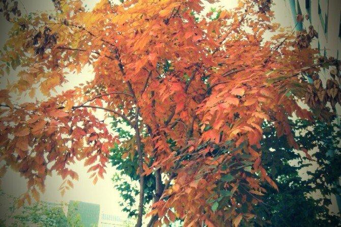 Los colores cálidos del otoño