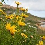 Playas en Malta: Cala de San Blas