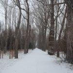 El Bosque de Finlandia en Rascafría