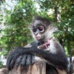 Que ver y que hacer en la excursión a Aktunchen en Riviera Maya