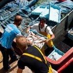 La lonja de pescado de Malpica de Bergantiños