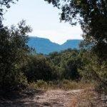 Ruta senderista Camino de Viana en Trillo