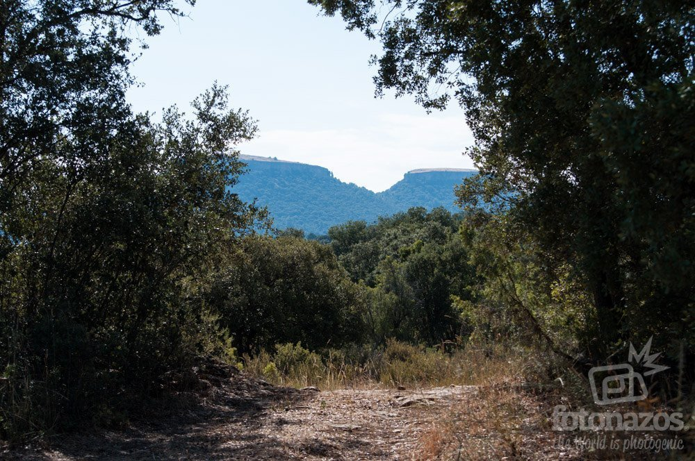 Camino de Viana