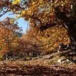 10 Sitios donde disfrutar del otoño cerca de Madrid