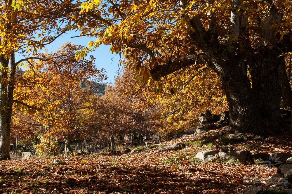 Sitios donde disfrutar del otoño cerca de Madrid