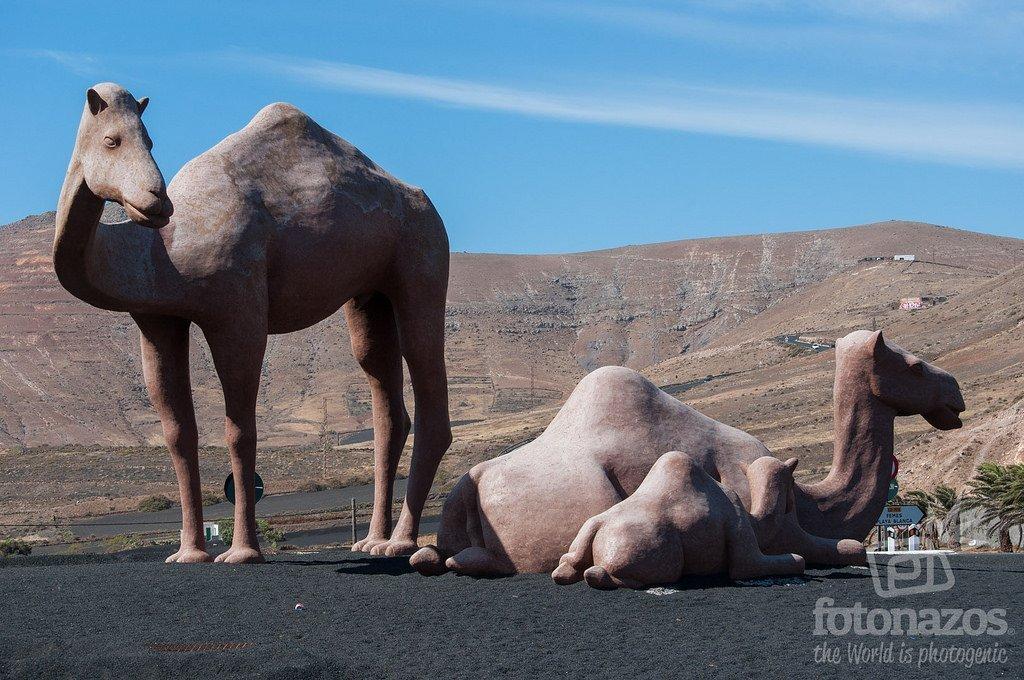 La Rotonda Homenaje al Camello de Lanzarote