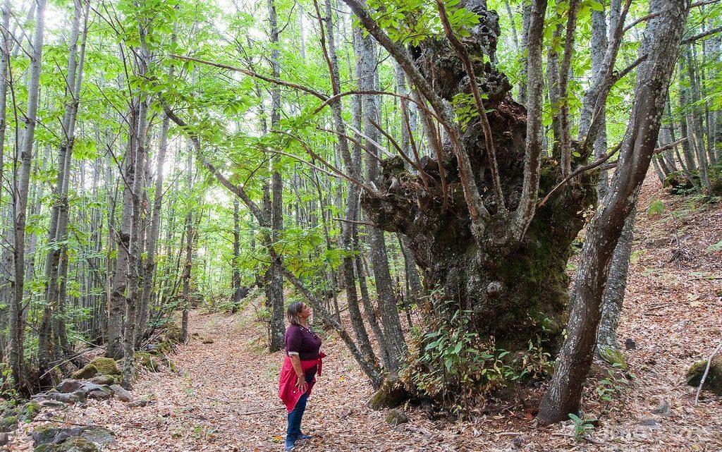 Ruta por la Calzada al Castañar de San Martín de Trevejo, Sierra de Gata