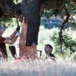 La Saca del Corcho en Tajo Internacional, Extremadura