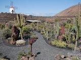El Jardín de Cactus de Lanzarote